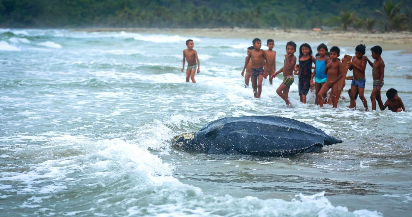 Guna Yala San Blas Leatherback